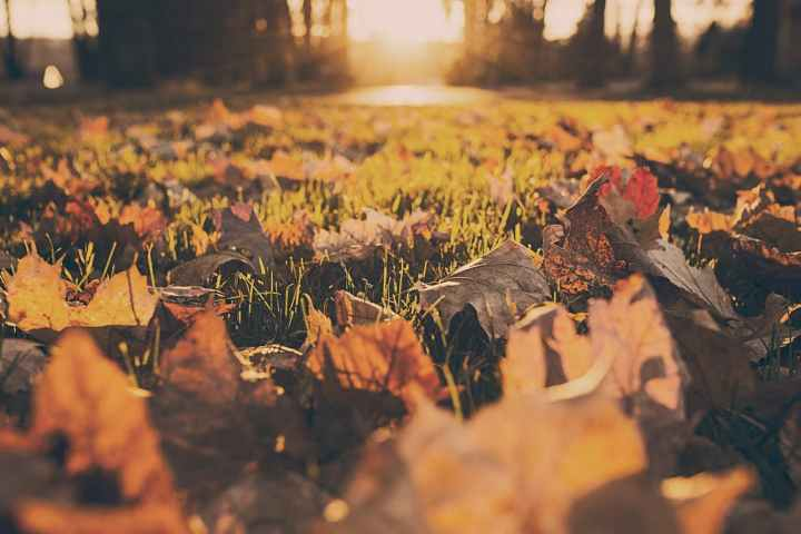 forest-meadow-leaves-autumn